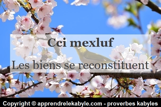 proverbe kabyle berbere amazigh